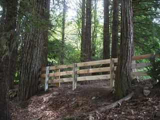 Fenceredwoods