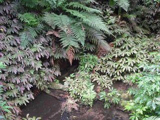 Maungatautaribushdetailnettlesferns