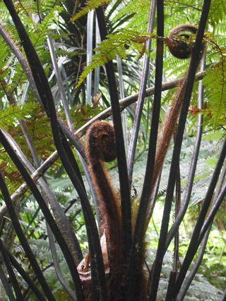 Maungatautarikoru