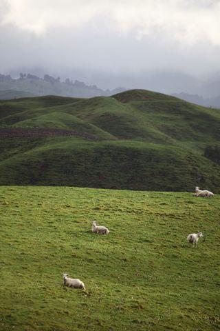 Farmwinterlandscape