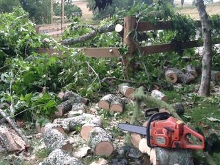 Tree on gate 2