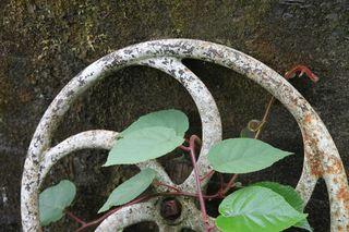 Gardenwheelvine