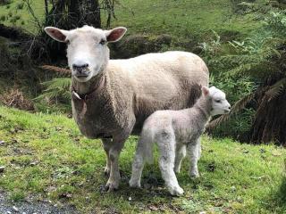 Rosie and lamb